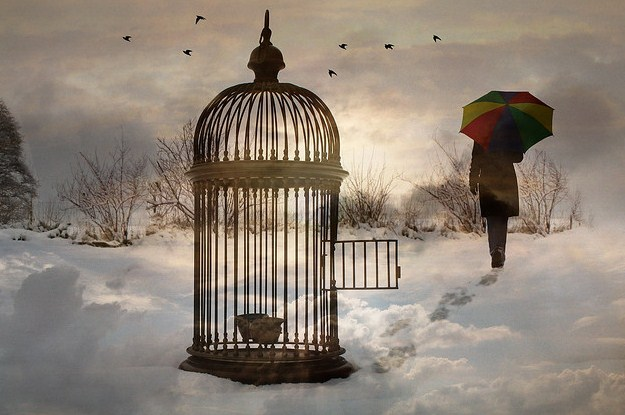 Birds - Birdcage