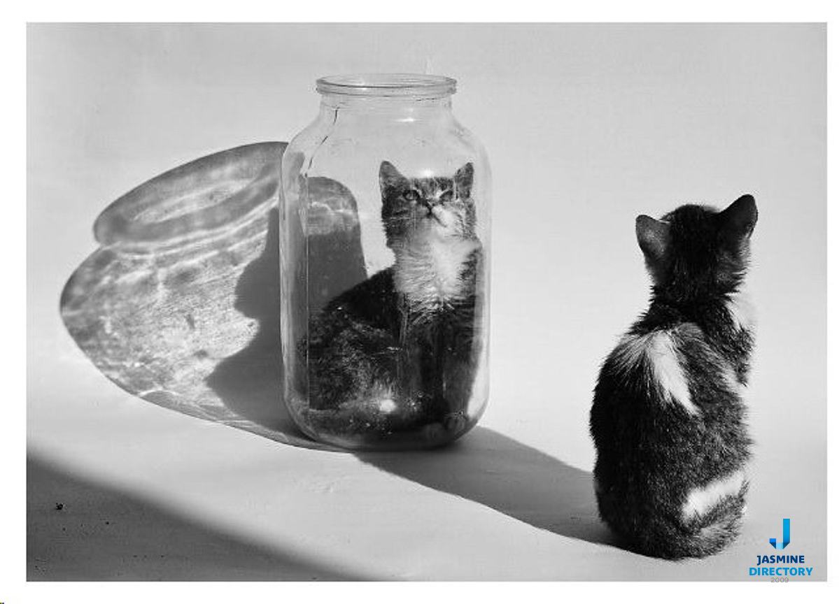 A cat looking to another one which is placed into a glass jar