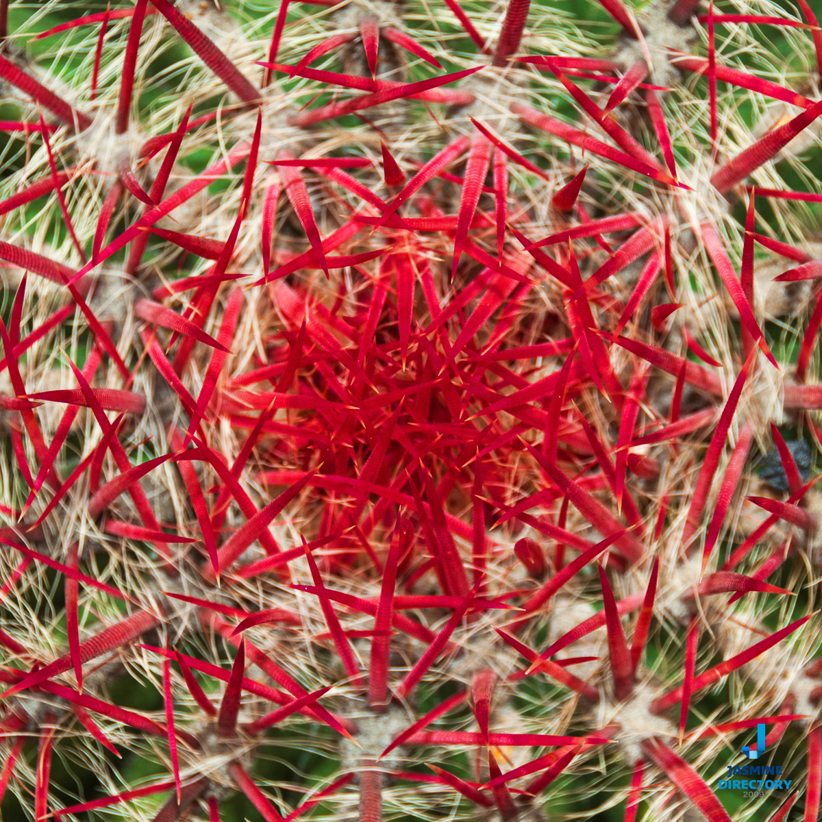 Cactus with red spines
