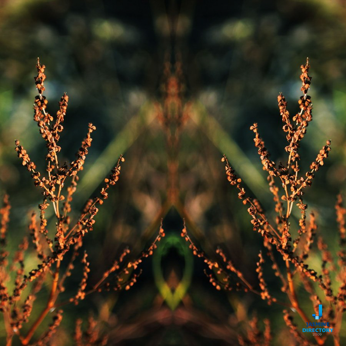 Abstract Symmetrical Photograph