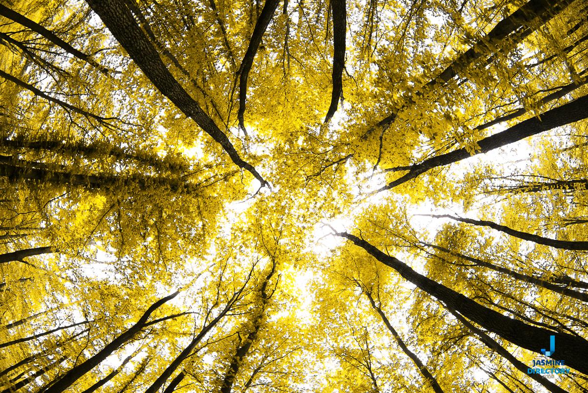 Symmetrical wood