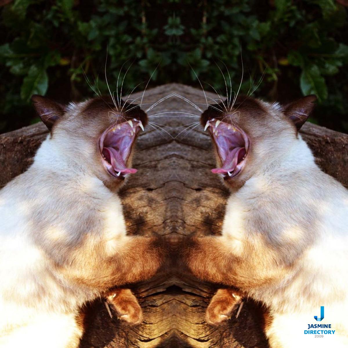 Symmetrical pho shot