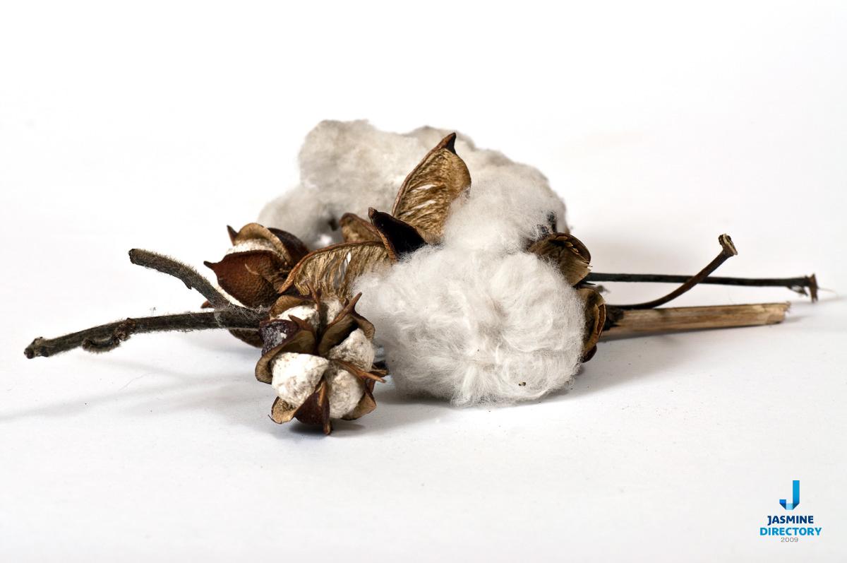 Cotton - Towel